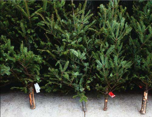Donate Artificial Christmas Tree